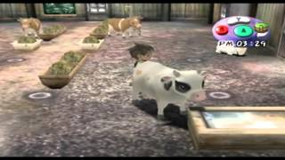 Let's Play Harvest Moon A Wonderful Life #448 - Medien vs Realität