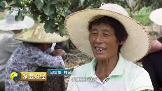 《深度财经》 20190831 大众药材种出新天地| CCTV财经