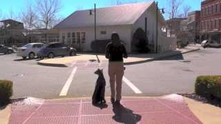 Max, Doberman, Day 8: Dog Park Recall, Street And Stair Manners, Stores