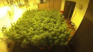 Cannabis grow timelapse *3rd round*