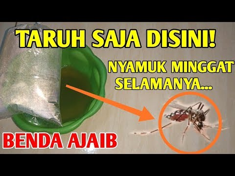 kali saya berbagi cara mengusir nyamuk dengan suara simak videonya sampai selesai ya. Suara pengusir.