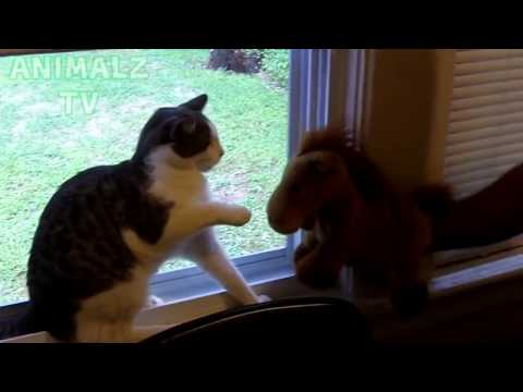 CUTE PET VIDEOS   Funny DOGS And CATS vs STUFFED Animals