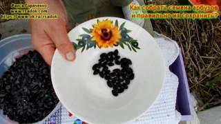 видео Сохранение арбузов и дынь