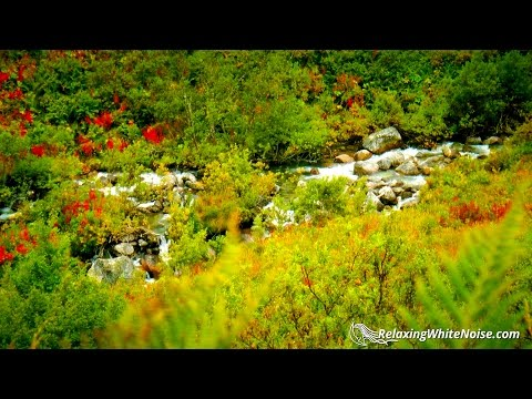 Stream & Bird Sounds for Relaxation | 10 Hours Nature Ambien