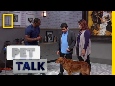 Misconceptions About Microchipping   Pet Talk