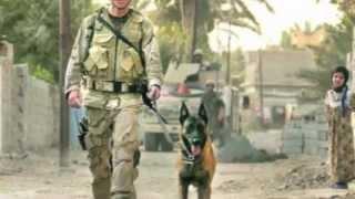 Veteran's Day Salute Thumbnail