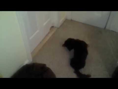 DOG REALLY NEEDS TO GO-TO THE BATHROOM