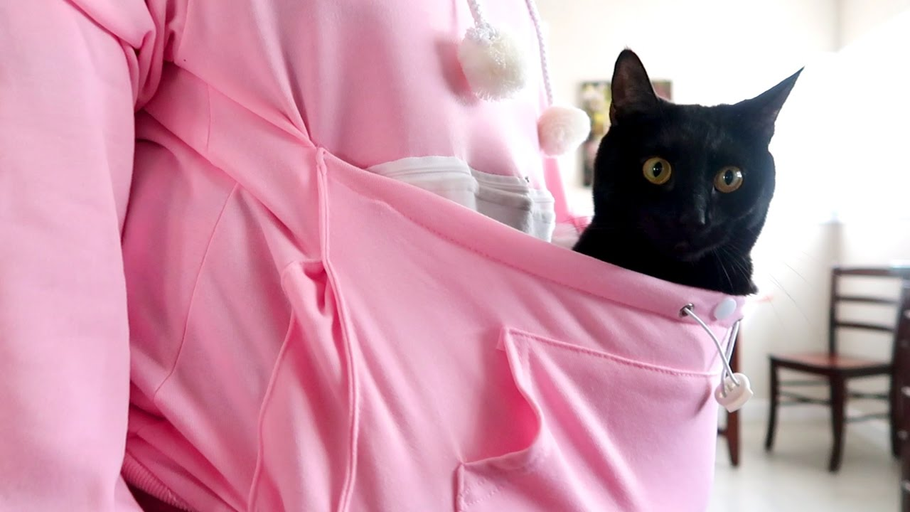 THE CAT POUCH SWEATER - YouTube