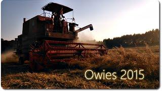 Żniwa z pompą czyli Owies 2015 ||2xBizon|Zetor|Belarus||