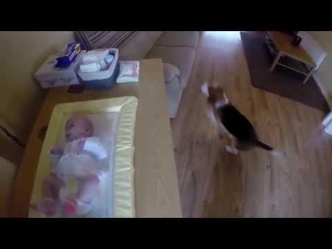 Собака помогает ухаживать за младенцем