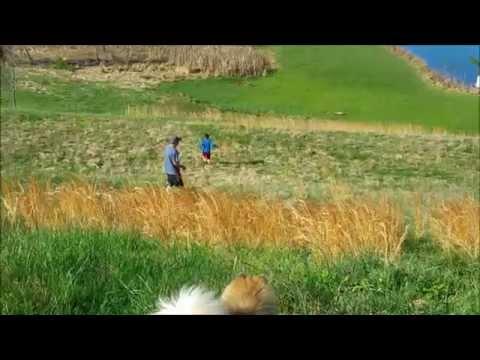 Weekend Morning Dog Walk & Play with A Pembroke Welsh Corgi, a Green Cheek Conure, & a Pomeranian