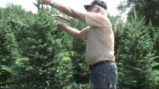 Christmas Tree Trimming Lesson.mov