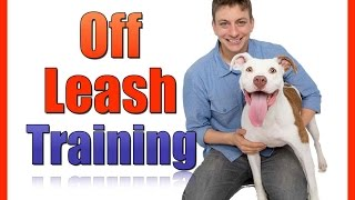 Train your Dog to be OFF LEASH: The First Steps