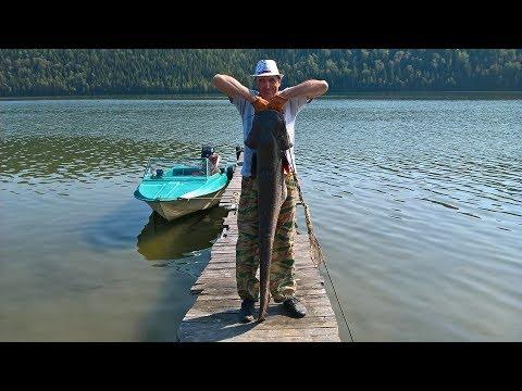 Сом на квок на Павловском водохранилище Fishing for catfish on Kwok