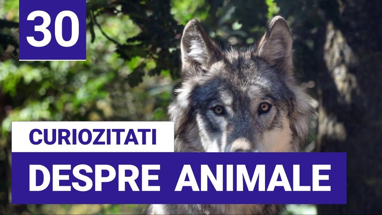 30 de Curiozitati despre Animale - Informatii interesante despre animale