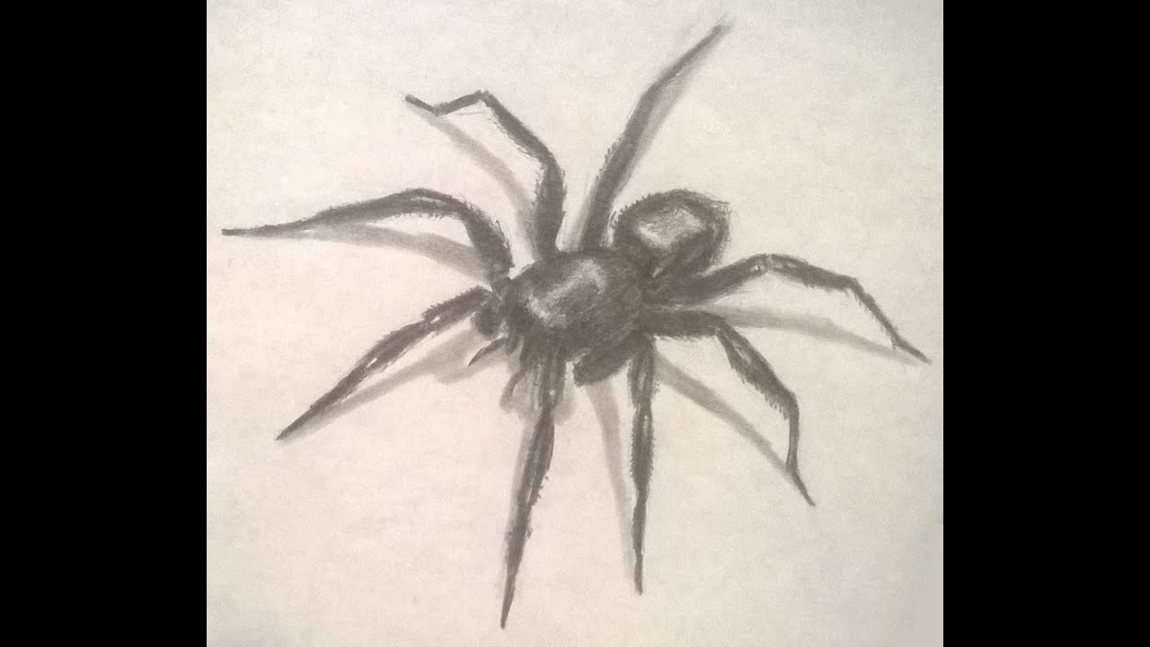 It's just a graphic of Priceless Drawing Of Spiders