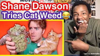 """TRYING """"CAT WEED"""" WITH MY CAT By Shane Dawson Reaction"""