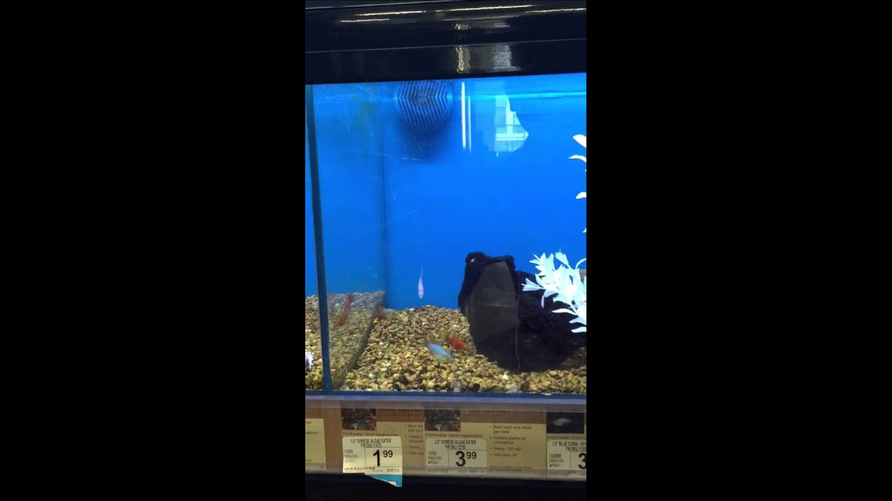 petco fresh water fish display and prices youtube