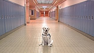 Artie - Centennial Middle School's Therapy Dog