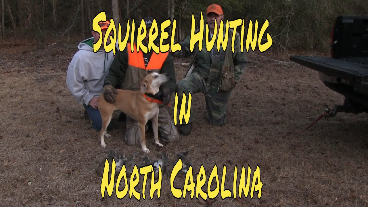 N.c. Squirrel Season Squirrel Hunting in No...