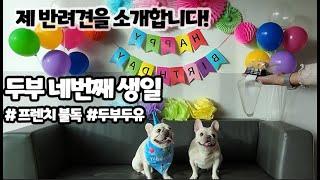 개엄마의 하루 강아지생일파티의정석 #프렌치불독