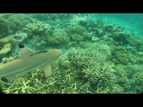 Maldives Ocean Rreef Maafushivaru Island