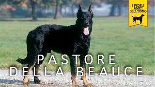 PASTORE DELLA BEAUCE trailer documentario