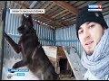 На Ямале возможно все – даже дружба человека и волка!
