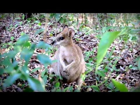 OZ Trip : mon voyage en Australie