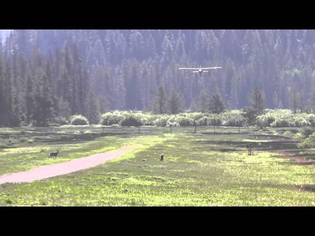 Deer on the runway Sulphur Creek
