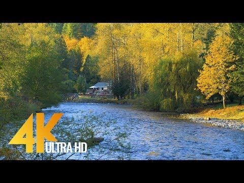 4K Nature Autumn Scenery - Fall Colors and Autumn Foliage. Episode #3