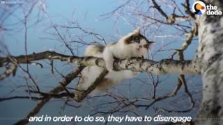 Guy Climbs Trees To Rescue Cats | The Dodo