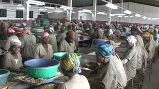 Mozambique Cashew Traceability