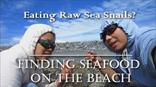 Let's Eat Sea Snails! Survival Seafood on the Beach!