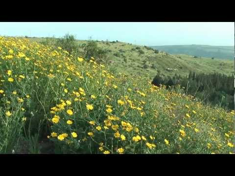 Spring In The Golan Heights, Israel