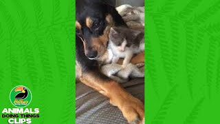 Snuggling Dog and Kitten | Animals Doing Things Clips