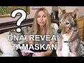 DOG DNA REVEAL - TAMASKAN DOG - SHOCK RE