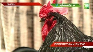 Птичий вирус держит в страхе фермеров: усилен контроль на посту Верхнеуслонского района - ТНВ