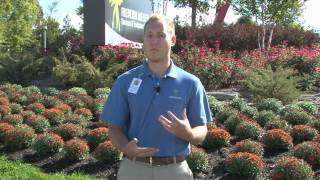 Making Most of Your Mums - A Meijer Gardens Gardening Tip