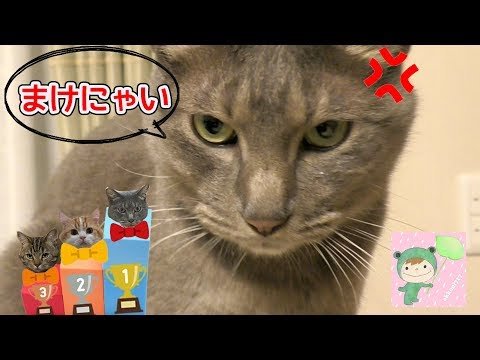 猫さんの場所取り選手権!!