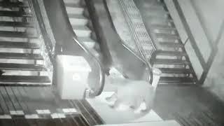 Медведь на эскалаторе в Сочи