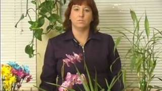 how to keep house plants healthy alive caring for tropical or exotic house plants