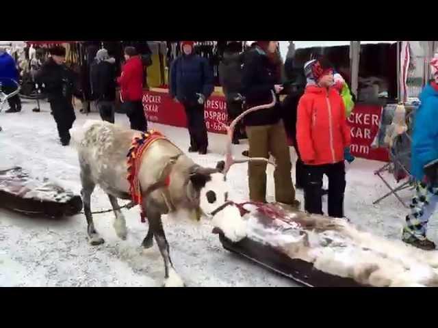 Nordkapp Vintertur 2015 - Video 12 - Jokkmokk Vintermarked