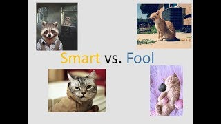 funny video 2018  funny animal animal falls 2018 crazy animal funny dag and cat funny moment