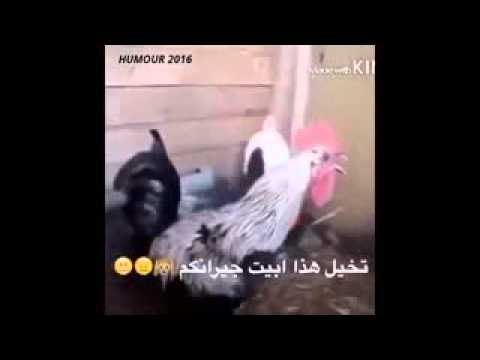 video fokaha maroc 3gp