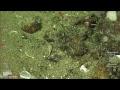 ROV SuBastian Dive 227 Costa Rican Deep Sea Connections