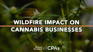 Impact of Wildfires on Cannabis Industry & Cannabis Businesses