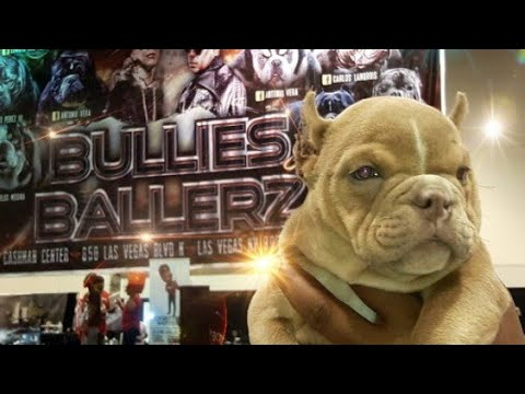 BULLIES AND BALLERS DOG SHOW | LAS VEGAS | WEED SHOP