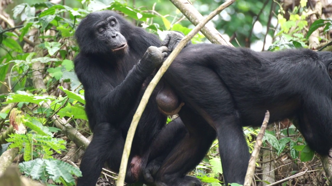 Read What Bonobos Can Teach Us About Sexual Assault Online