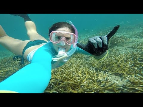 Snorkeling And Identifying BEAUTIFUL Florida Reef Fish!